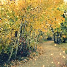 fall canon leaves
