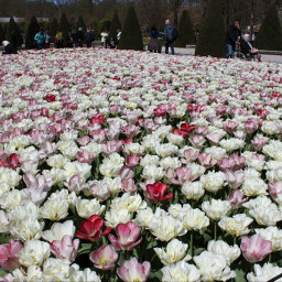flower travel