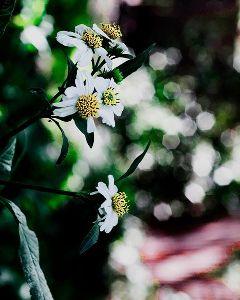nature bokeh nikon spring flowers