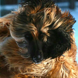 photography emotions pets & animals travel nature