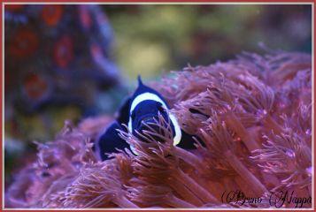 nature pets & animals colorful macro fish cute