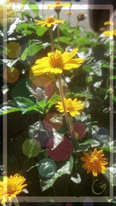 photography flower bokeh nature