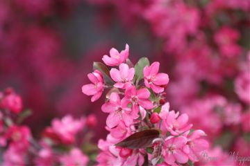 nature photography colorful spring flower