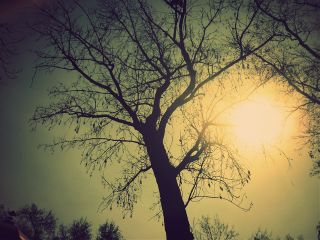 photography nature sun tree