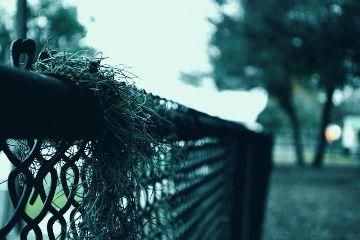 fence blue bokeh nature nikon