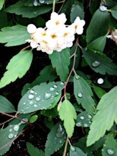 photography nature spring rain