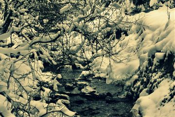 nature snow winter