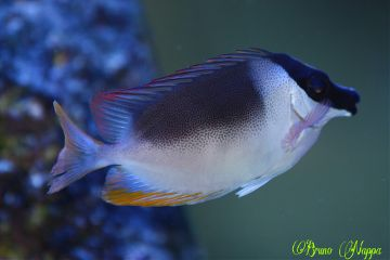 nature pets & animals photography colorful fish