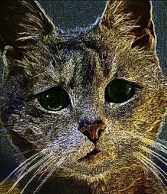 dcpets colorful emotions pets & animals color splash