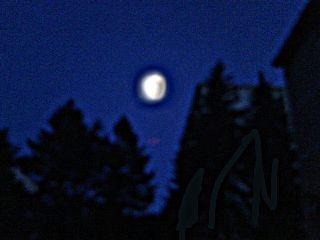 night nature summer