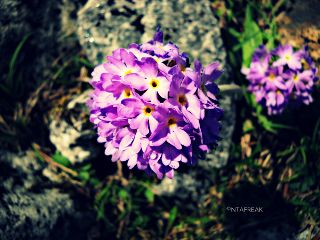 photography nature colorful travel macro flower